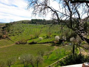 Flavor of Italy Tuscany Food Tour - Vineyard