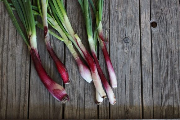 Long red tropea onions