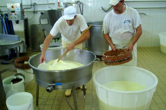 Making buffalo mozzarella
